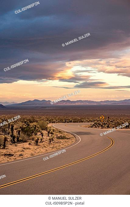Landscape view of winding road in Joshua Tree National Park at dusk, California, USA