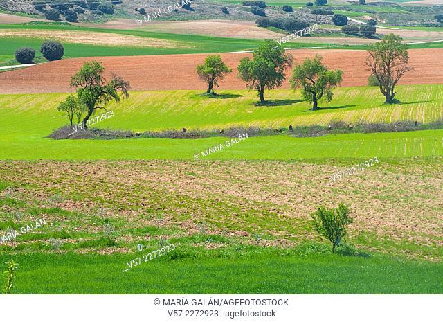 Agricultural landscape. Cuenca province, Castilla La Mancha, Spain