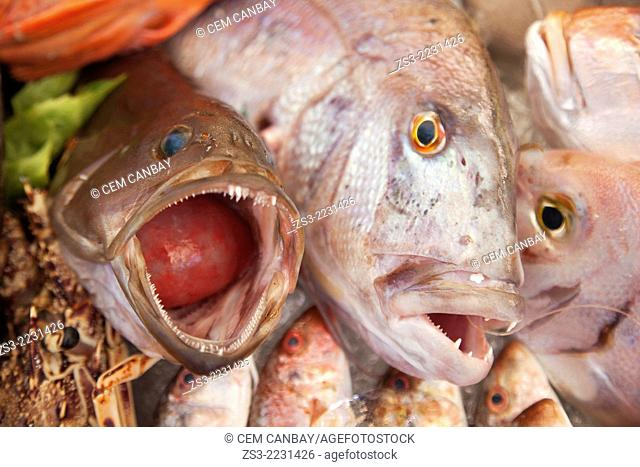 Close-up shot of Mediterranean fish in the freezer, Bodrum, Mugla, Aegean Sea, Turkish Riviera, Turkey, Europe