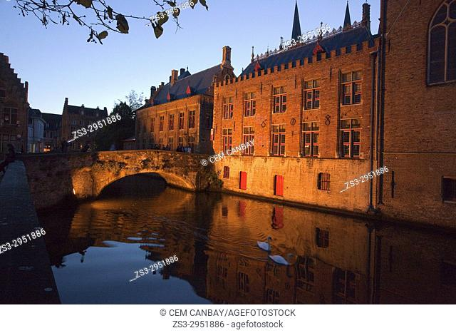 Swans in front of the illuminated houses and bridge near the canal in the old town by night, Bruges, West Flanders, Belgium, Europe