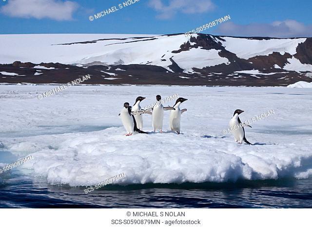 AdÇlie penguin Pygoscelis adeliae near the Antarctic Peninsula, Antarctica MORE INFO The AdÇlie Penguin is a type of penguin common along the entire Antarctic...