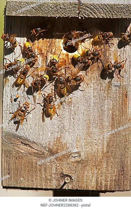 Bees on beehive