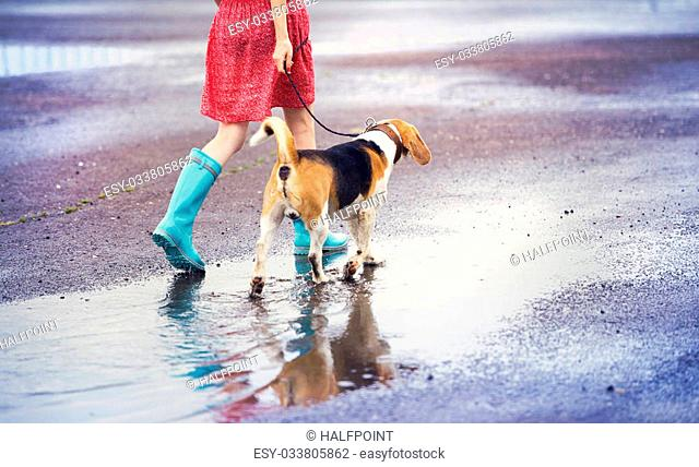 Unrecognizable young woman in dress and blue wellies walk her beagle dog in street