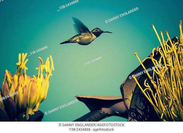 Vintage Style Hummingbird
