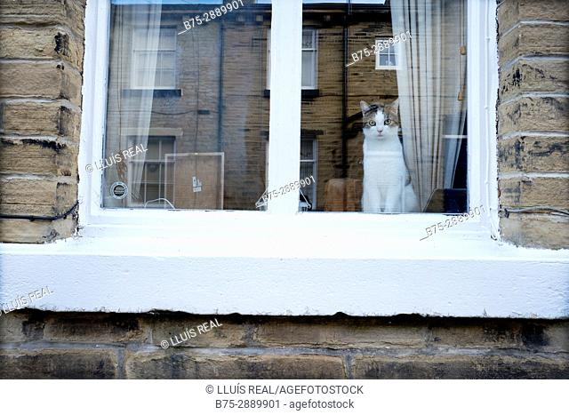 Close-up of a cat behind a window looking at the camera. Saltaire, Bradford, West Yorkshire, England