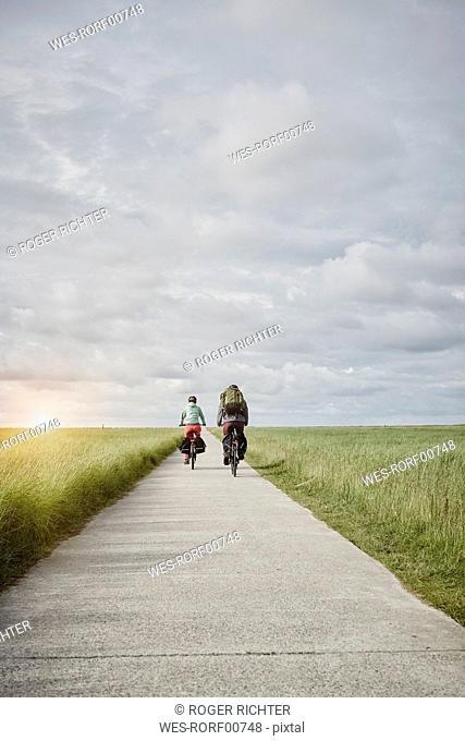 Germany, Schleswig-Holstein, Eiderstedt, couple riding bicycle on path through salt marsh