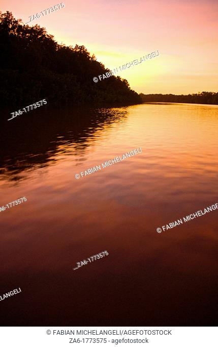 Sunset sky reflected on a water channel in the mangrove forest of Turuepano National Park, Eastern Venezuela
