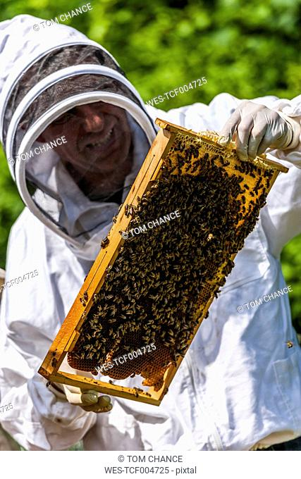 Beekeeper holding stillage with honeycomb