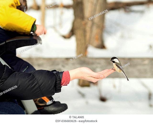 Woman hand-feeding a black-caped chickadee