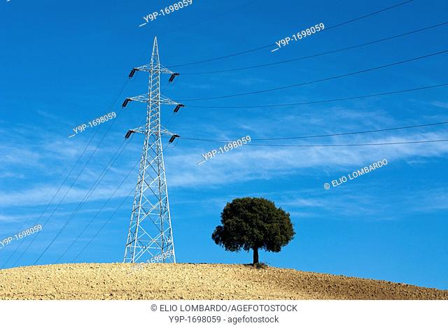Electricity pylon and tree in cultivated field  Umbria, Italy