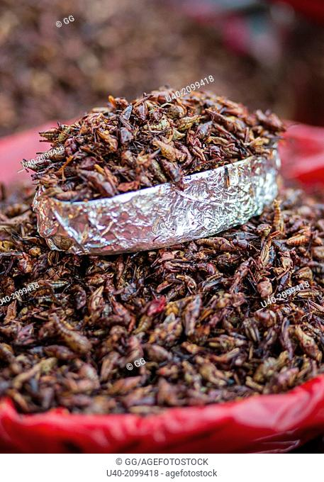 Mexico, Oaxaca, fried grasshoppers