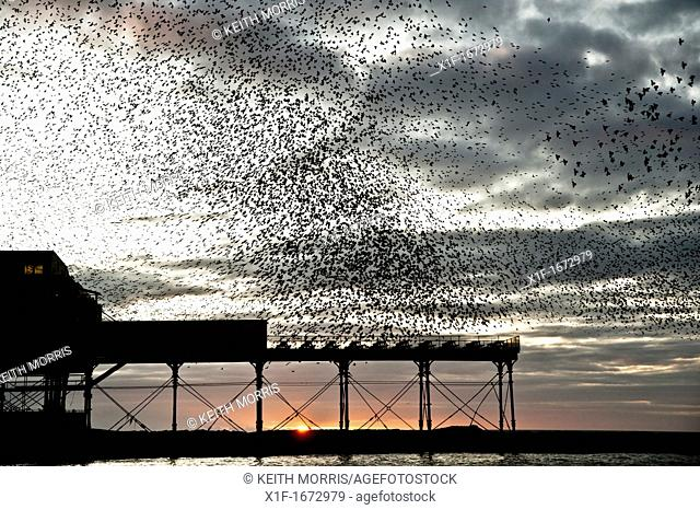 starlings roosting over aberystwyth pier at sunset, wales uk