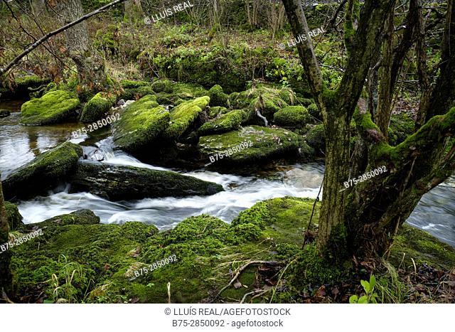Primer plano de una parte de un rio con arboles y musgo en la rocas. River Wharfe, Cray, Buckden, North Yorkshire, Yorkshire Dales, UK, Europa