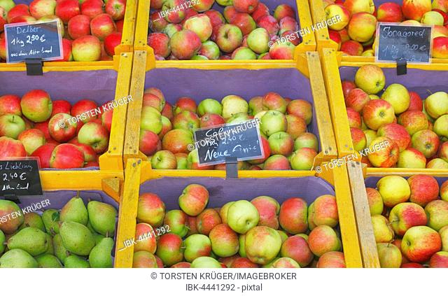 Variety of fresh apples and pears in wooden crates at market stall, Oldenburg, Lower Saxony, Germany