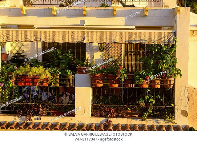 Terrace decorated with plants typical of the Santa Cruz neighborhood of Alicante, Valencia, Spain