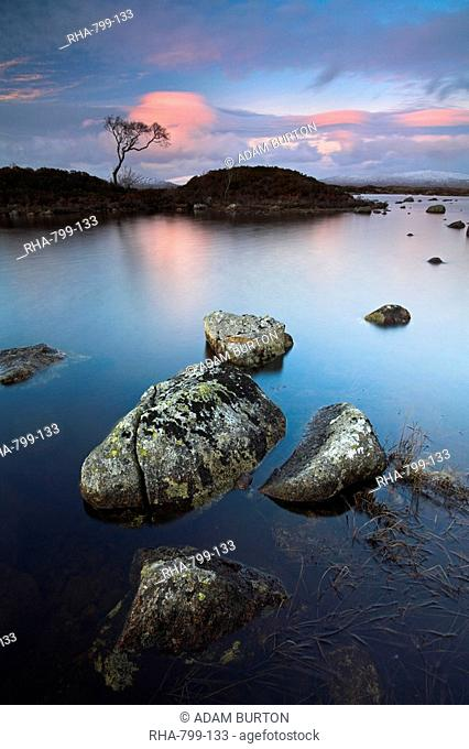 A lone tree stands isolated at Lochan Nah-Achlaise in Rannoch Moor, Highlands, Scotland, United Kingdom, Europe