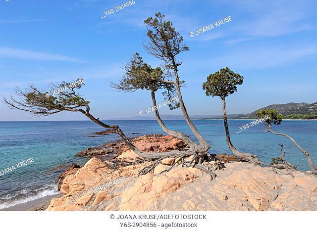 Palombaggia Beach, Porto-Vecchio, Corsica, France