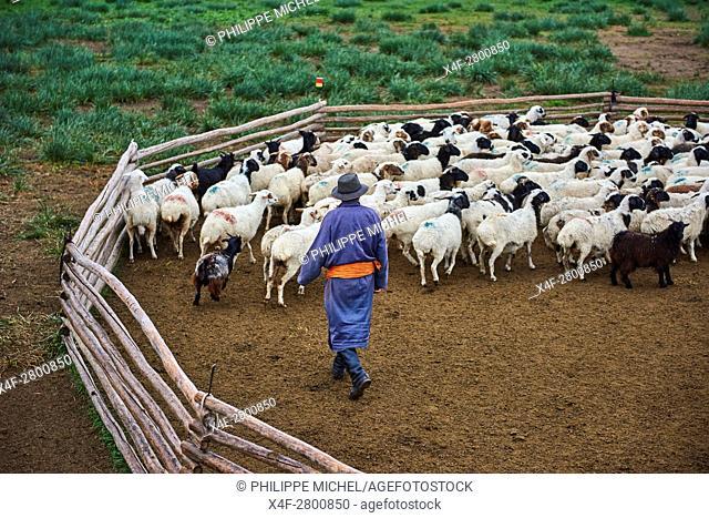 Mongolia, Arkhangai province, nomad camp, sheep herd
