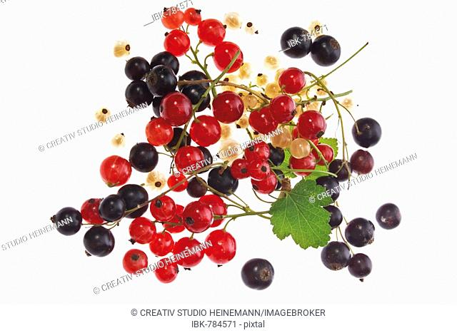 Red, black and white currents (Ribes)