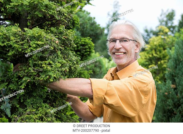 Mature man examining a hedge plant in plant nursery, Augsburg, Bavaria, Germany