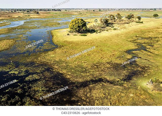 The Gomoti River with its adjoining freshwater marshland, with scattered Red Lechwe (Kobus leche leche), aerial view, Okavango Delta, Moremi Game Reserve