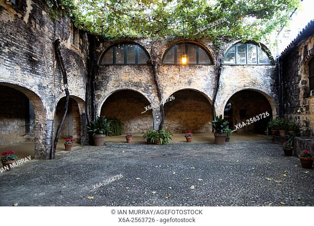 Historic courtyard with grapevines, Gonzalez Byass bodega, Jerez de la Frontera, Cadiz province, Spain