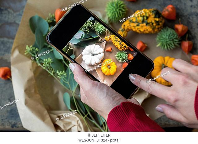 Autumnal decoration, ornamental pumpkins, woman taking photo with smartphone