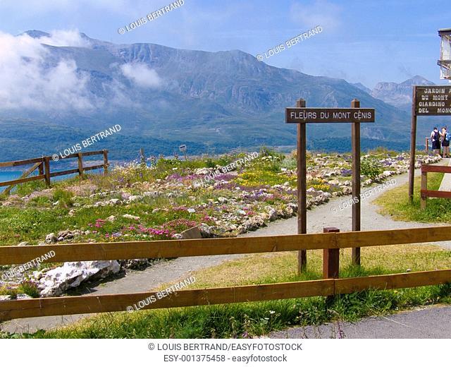 botanical garden,mont cenis,lanslevillard,savoie,france