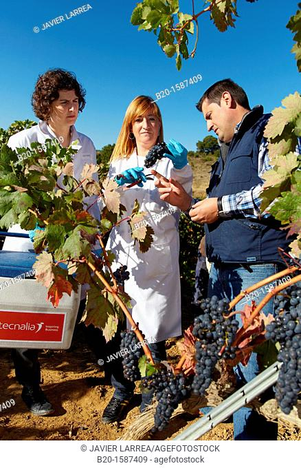 TECNALIA Researchers by sampling grapes in the vineyard of Bodegas Baigorri  The monitoring of the grape from the vineyard is essential for obtaining a high...