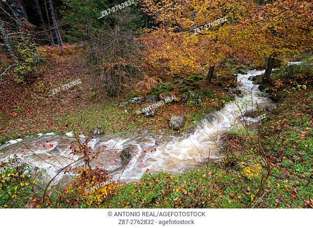 Creek in autumn, Selva de Oza, Valle de Hecho, Valles Occidentales Natural Park, Pyrenees Mountains, Huesca province, Aragon, Spain