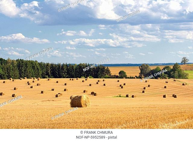 Field with bales of hay, blue sky, southern Bohemia. Czech Republic