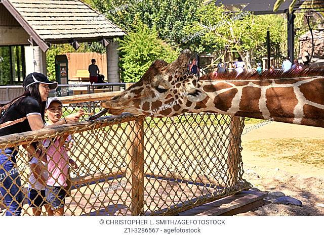 Children feeding the Giraffe's at Reid Park Zoo in Tucson, AZ