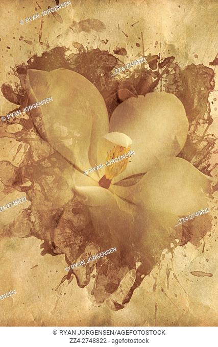Old ornate paper and photo combination on a Magnolia flower under a splash of paper texture. Romanticising yesterdays