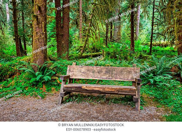 Empty log bench in the forest in Olympic National Park, Washington. Stock photo of a rustic log bench in the forest in the Hoh Rainforest
