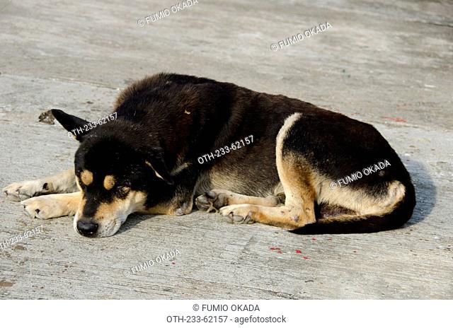 A stray dog, Kau Sai Chau, off Sai Kung, Hong Kong