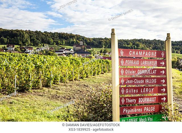 Champagne producer signs and vines near Epernay, Champagne, France