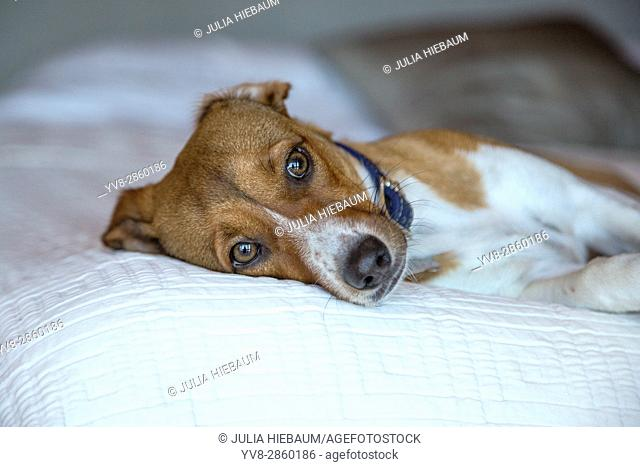 Dreamy mixed breed puppy
