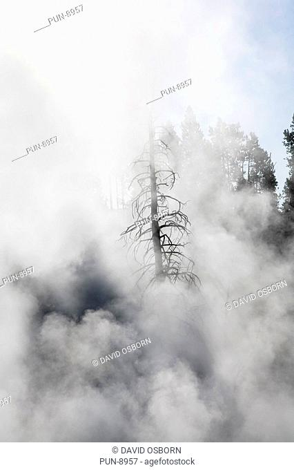 The steam from Yellowstone's Fountain Paint Pot rising and enveloping the nearby trees