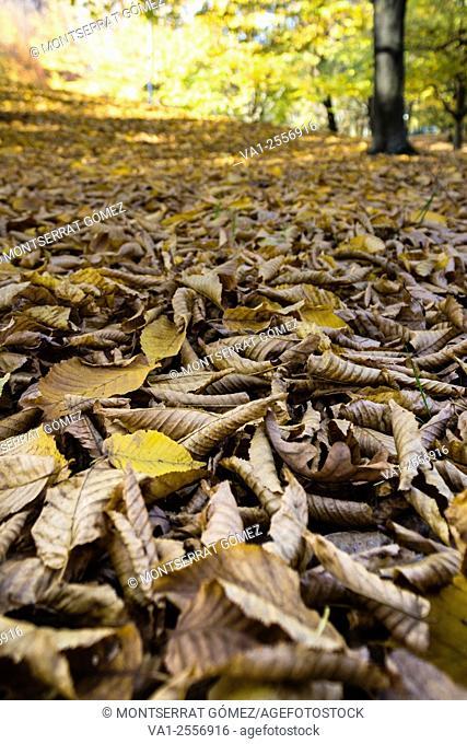 triumph of leaf litter. Vigevano, Italy