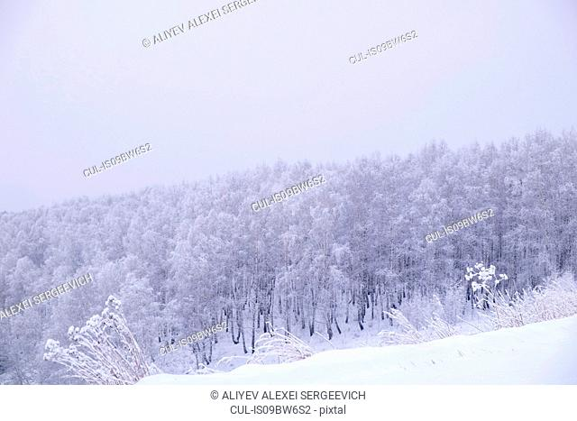 Snow covered landscape and forest