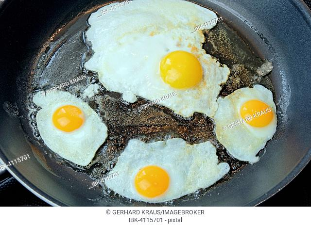 Quail and chicken eggs being fried in a pan
