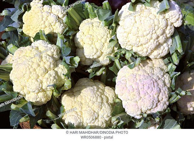 Green vegetable cauliflower brassica oleracea in basket
