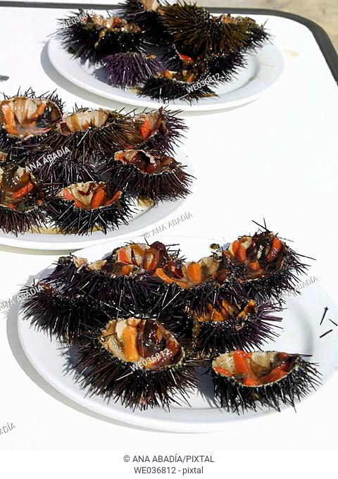 Sea urchins. Calella de Palafrugell. Costa Brava, Girona province, Catalonia, Spain