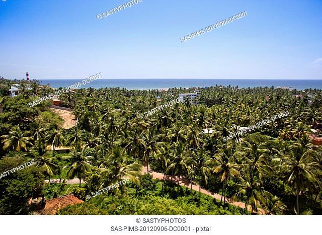 Palm trees on the beach, Kovalam, Kerala, India
