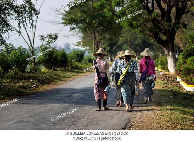 Female field workers heading to work in the fields in Nyaungshwe, Myanmar