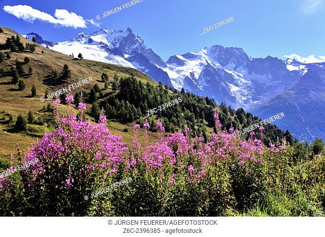 Red flowers and beautiful mountain scenery of the Alps, Hautes-Alpes, French Alps, France