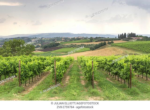 Vineyards near to Todi, Umbria, IT