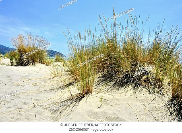 View from sand dunes to watch towers of Maremma, Tuscan beach, Tuscany, Italy