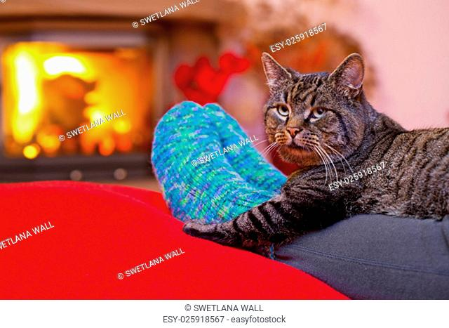 Woman relaxes by warm fire and warming up her feet in woollen socks. Winter and Christmas holidays concept.Seated Gray Cat with Santa hat and a fireplace