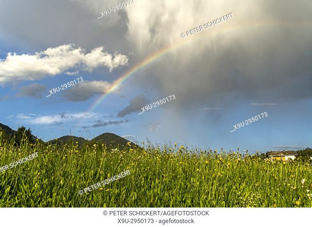 rainbow and a field of flowers, Obsteig Holzleiten, Tyrol, Austria